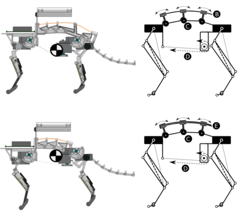 Comparing the effect of different spine and leg designs for a small bounding quadruped robot