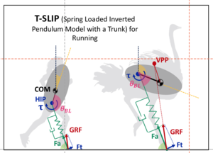 Impact of Trunk Orientation  for Dynamic Bipedal Locomotion