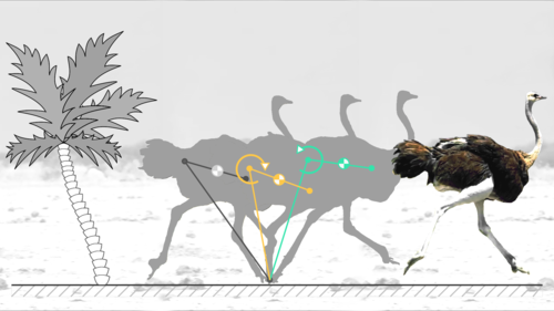 Trunk pitch oscillations for energy trade-offs in bipedal running birds and robots
