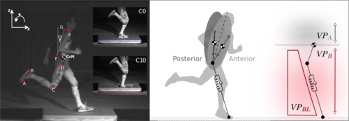 Postural stability in human running with step-down perturbations: an experimental and numerical study