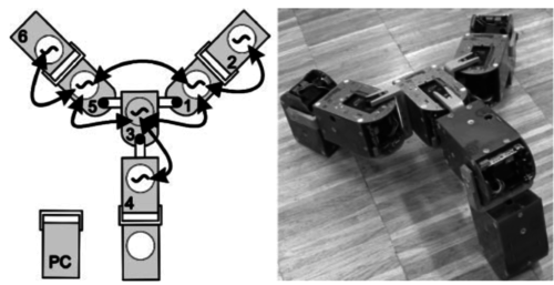 Learning to Move in Modular Robots using Central Pattern Generators and Online Optimization